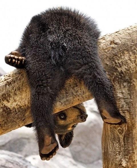 A bear's bottom
