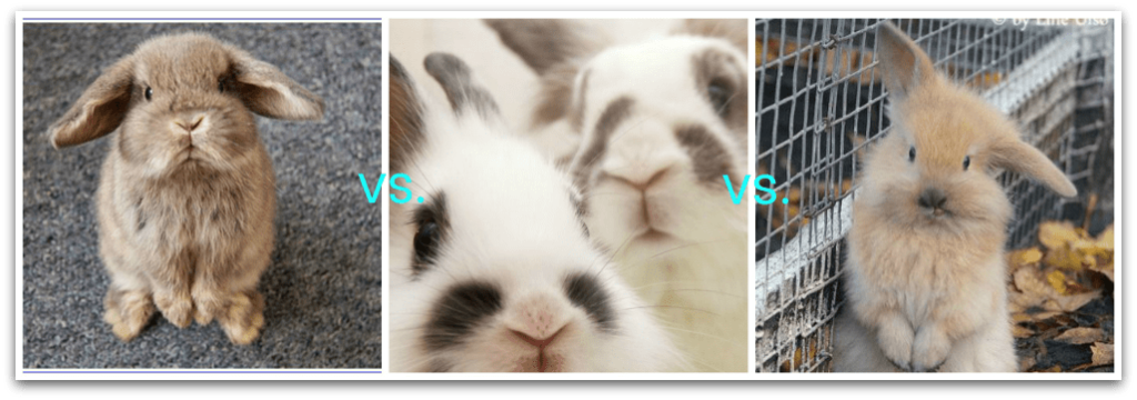 These bunnies show how different each secondhand shop can be
