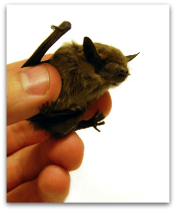 Having a brown bat in your bathroom teaches you how to write consignor contracts
